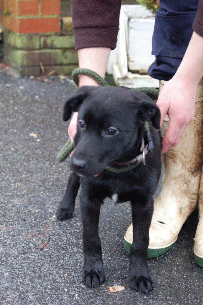 Puppies may also be left stranded, including Sally a four month year old stray.