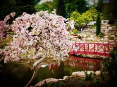 avenham japanese garden