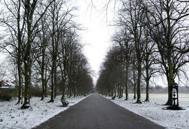 Haslam Park in the snow