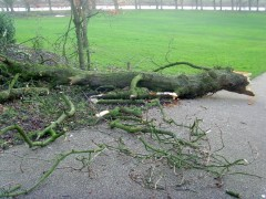 The branch used came from a tree felled by Monday's high winds