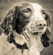 Jasper was praised by officers for sniffing out the cash and drugs