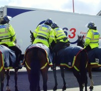 Police horses on patrol