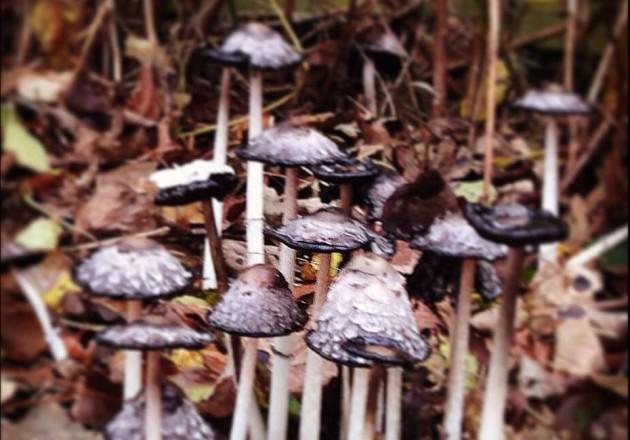 funghi-1-630