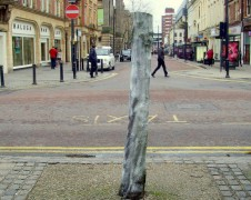 One of the trees which has been cut down on Fishergate Pic: Tony Worrall