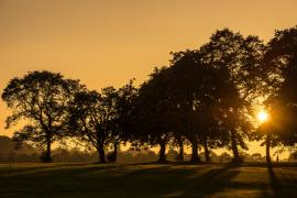 Moor Park sunset Pic: Shabbagaz
