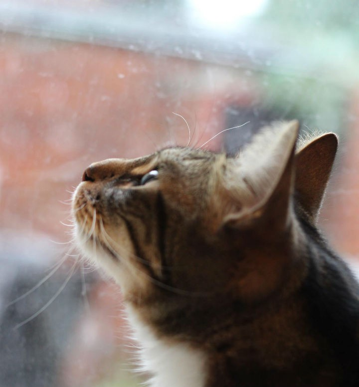 Tabitha Boydell's cat watches on as snow falls
