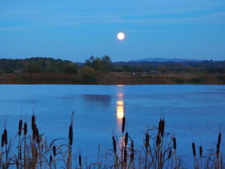 Moon over Brockholes by Bob Entwistle