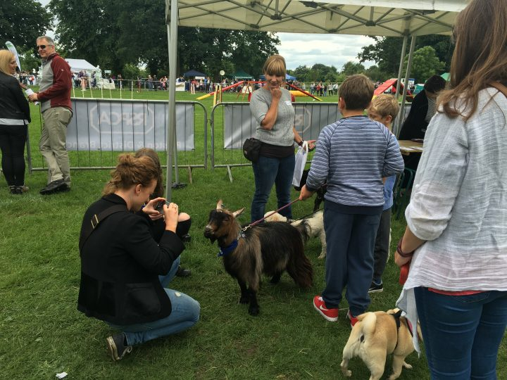 "Goat called ""Hobo"" shared photos with visitors to the festival."