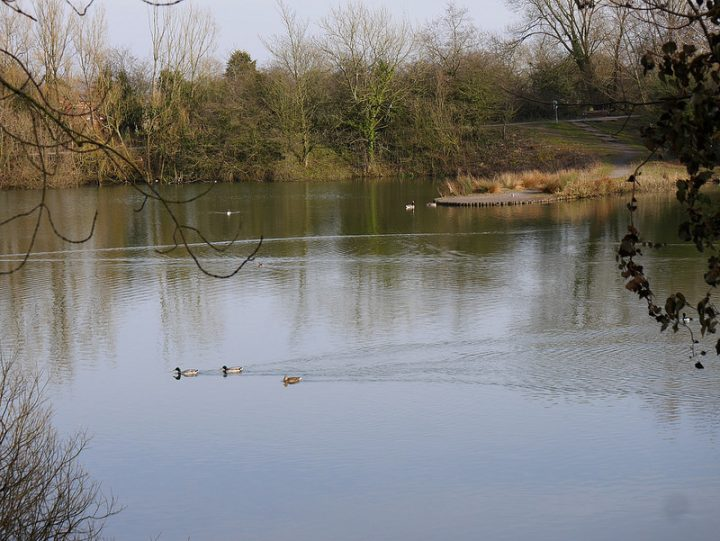 Ducks on the lake at the nature reserve Pic: Paul Swarbrick