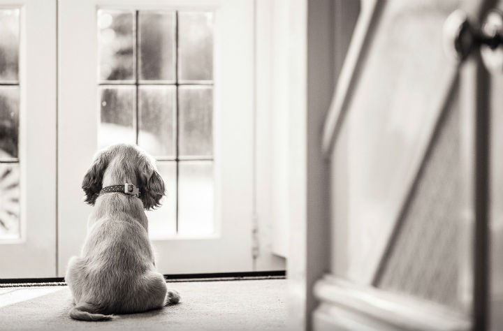 When can I go outside? Pic: CatsDog Photography