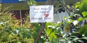A statement at Jam's garden