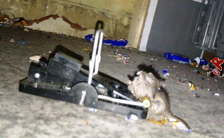 One of the mice found by inspectors