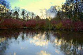 Pool reflection in Penwortham Pic: Tony Worrall