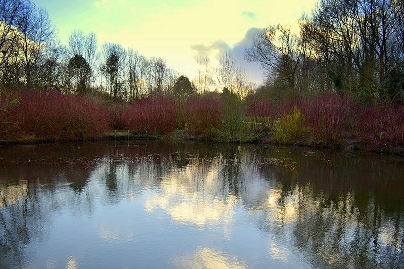 Pool reflection in Penwortham Pic: Tony Worrall