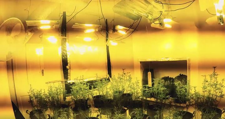 Inside the cannabis factory uncovered by Preston Police