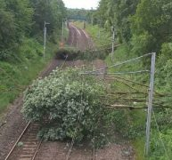 The fallen trees on the line to the north of Preston Pic: Virgin Trains
