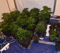 Cannabis was found in properties in Ribbleton