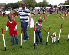 An owner tries to lead their dog through the agility course
