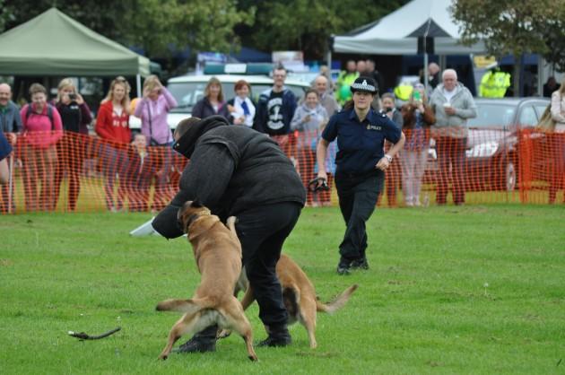 Dog handling 1