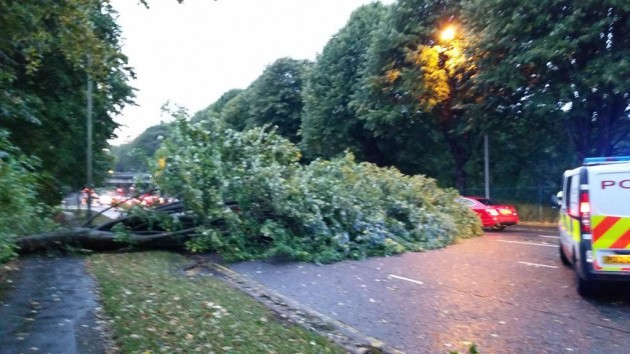 The tree on Liverpool Road Pic: Councillor Peter Kelly