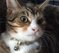 Tilly has not been seen since Tuesday evening