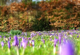 Ashton Park may see new flowers blooming Pic: Tony Worrall