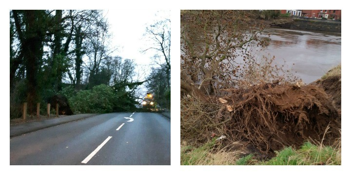 Trees uprooted on the A49 at Euxton and on the River Ribble at Broadgate Pics: Chorley Police + Peter Kelly