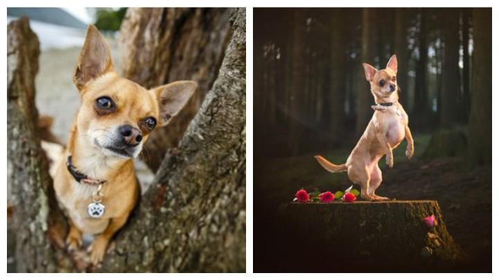 Two portraits of Cat's dog Poppy
