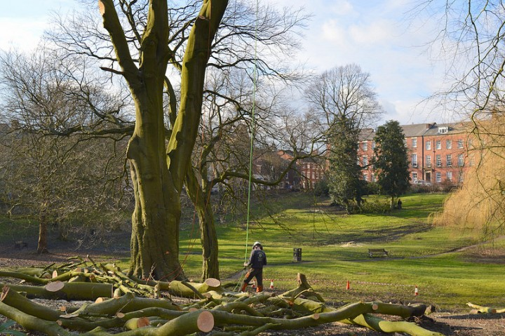 Felling of trees in Winckley Square Pic: Tony Worrall