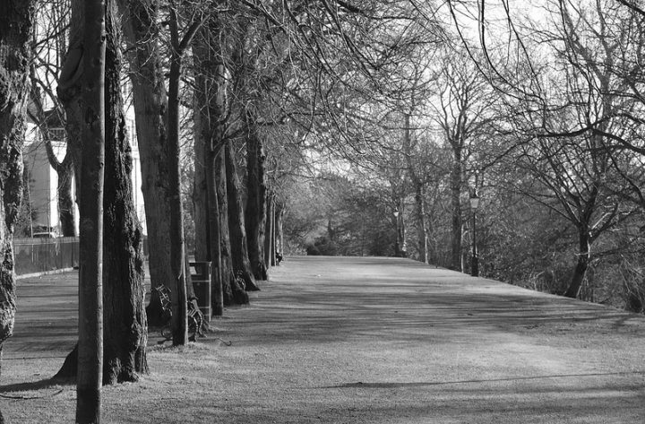 Avenham Park walkway Pic: Tony Worrall