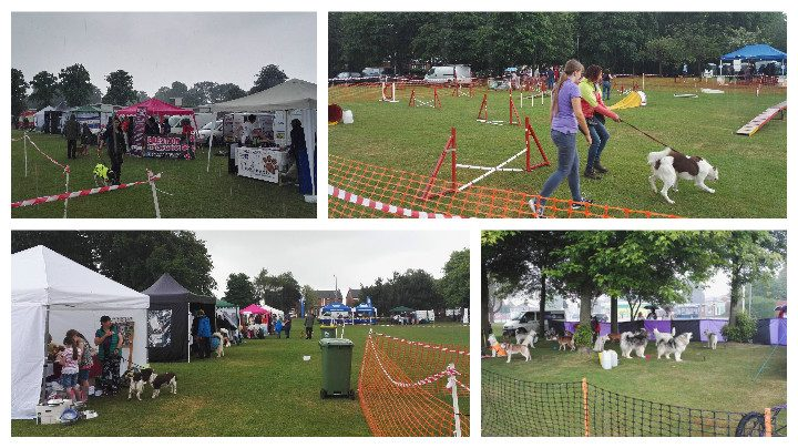 Dogs shelter under trees as the rain comes down at Ruffs Dog Show Pics: Benny Mc'Nally