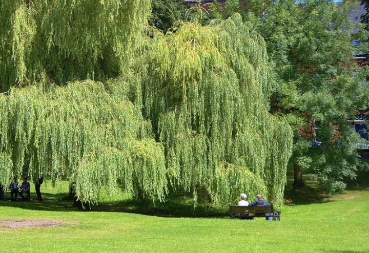 The gardens at Winckley Square are currently off limits Pic: Tpony Worrall