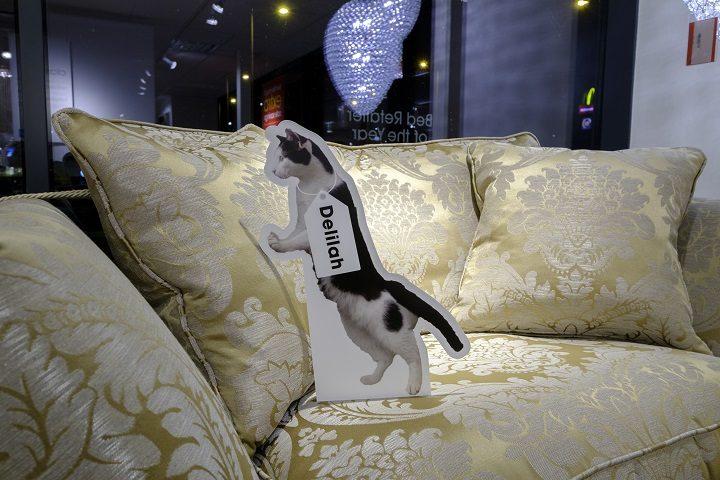 Playful Delilah on the sofa