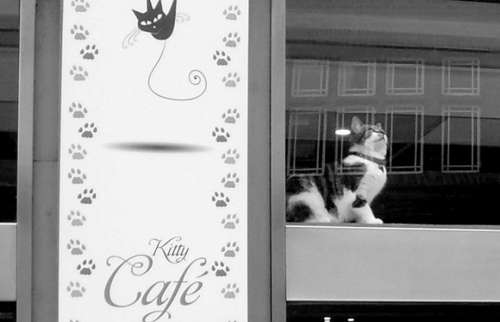 Cat cafe's have become popular across the UK, like this one in Nottingham Pic: Tony Worrall