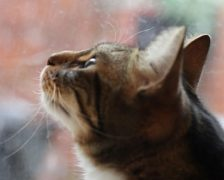 A cat watches the snow fall in Preston Pic: Tabitha Boydell