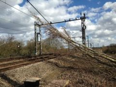 A tree falls on overhead power lines