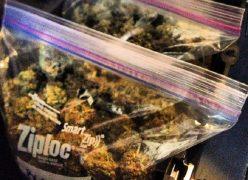 Bag containing cannabis Pic: Cannabis Culture