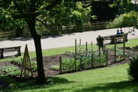 One of the allotments in Avenham Park