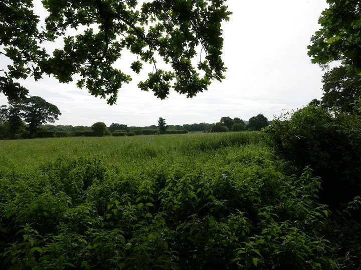 The field due for development in Hoghton