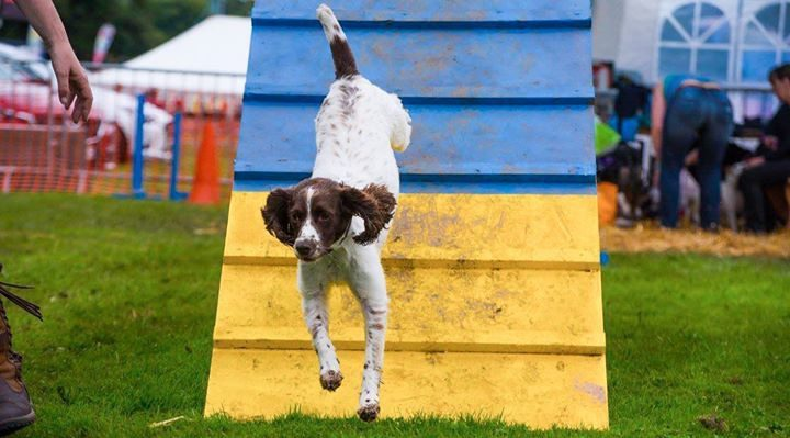 A dog doing tricks at last year's Royal Lancashire Show