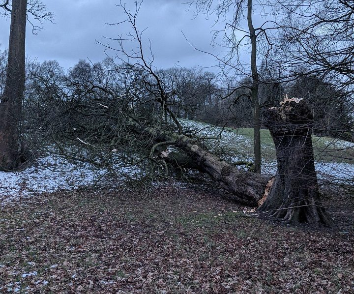 The fallen tree near Pear Tree Park Pic: Chris Hough