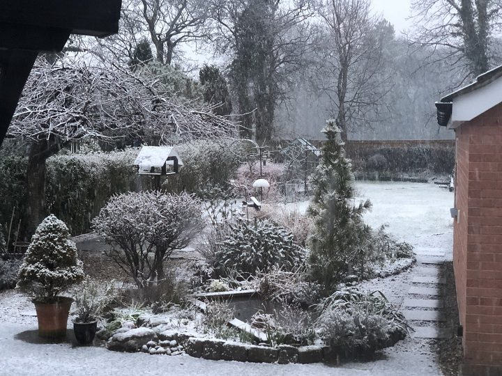 How one back garden looked in Penwortham on Thursday Pic: Bob Randell