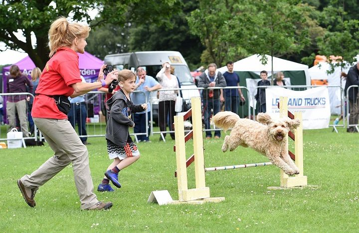 Part of the dog show