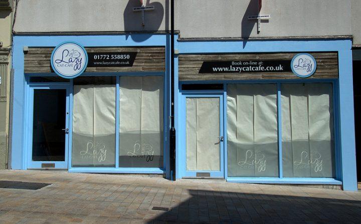 a cat cafe is opening in preston city centre blog preston. Black Bedroom Furniture Sets. Home Design Ideas