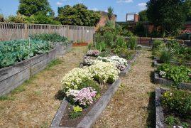 The Let's Grow garden in Ashton Park