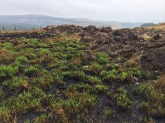 Green shoots have been coming through amongst the scarred hillside