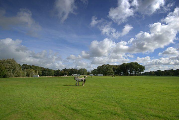 A horse belonging to the traveller group grazes in Moor Park with caravans behind Pic: Tony Worrall