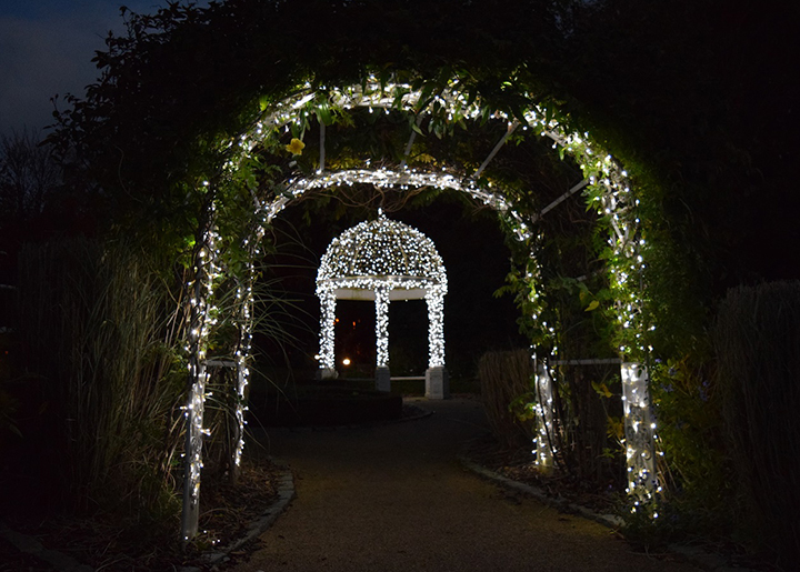 Lights in the grounds of St Catherine's Hospice