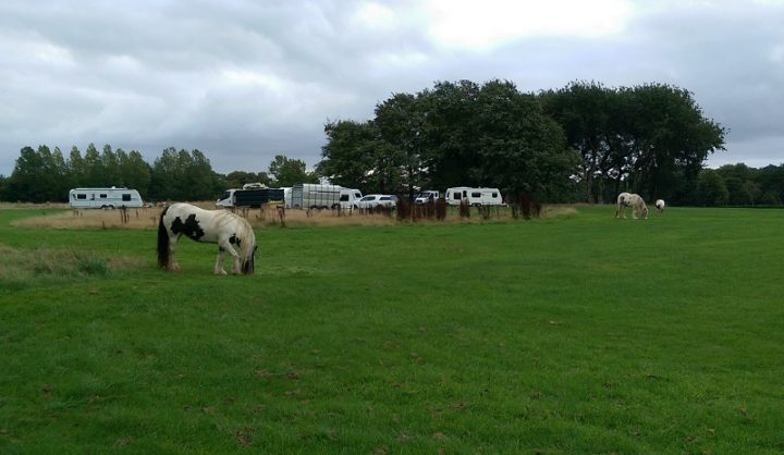 A horse grazes in Moor Park Pic: Blog Preston