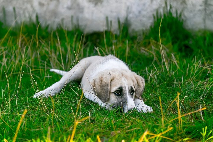 A stray dog Pic: isakarakus